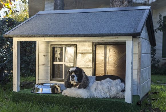 How to Help Your Dog Adjust to Your New Home by Rocket Homes